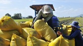 Đáp ứng vốn cho thương nhân, doanh nghiệp thu mua tạm trữ thóc, gạo