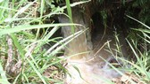 Nước thải từ phía sau nhà máy xả ra môi trường