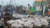 Ngư dân vận chuyển cá từ tàu lên bờ ở cảng Phước Tỉnh