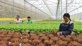 Đào tạo gần 3.000 lao động nông nghiệp công nghệ cao