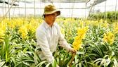 Hoa địa lan Đà Lạt nở sớm, nhiều nhà vườn thất thu