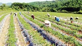 Cần 13,8 tỷ đồng hỗ trợ nông dân khó khăn