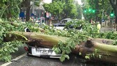 Bão Bebinca sẽ gây mưa lớn ở Trung Lào, lũ sông Cửu Long lên 4m