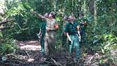 Những cựu chiến binh trên đường tuần tra rừng chiến khu D