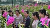 Festival Hoa lan TPHCM thu hút 90.000 lượt khách