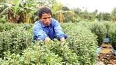 Hỗ trợ vốn 3,5 tỷ đồng cho gần 2.000 nông dân khó khăn
