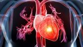 Phòng tránh các bệnh tim mạch chuyển hóa