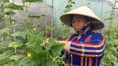 Nhờ hỗ trợ chính sách lãi vay, nhiều doanh nghiệp nông nghiệp  trên địa bàn TPHCM tiếp cận được nguồn vốn thuận lợi