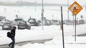 """""""Cơn ác mộng"""" bão tuyết tại Mỹ"""