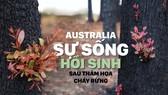 Australia - Sự sống hồi sinh sau thảm họa cháy rừng