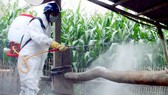 Tập trung phòng chống dịch cúm gia cầm