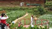 """Nhiều người dân tại Đà Lạt tiến hành làm """"mới"""" đất nông nghiệp"""