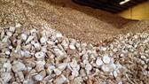 Xuất khẩu khoai mì lát tăng mạnh sau dịch Covid-19