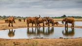 Ngăn chặn buôn bán động vật hoang dã thông qua điều tra tài chính