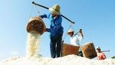 Phê duyệt đề án phát triển ngành muối giai đoạn 2021 - 2030