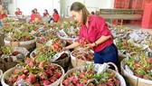 Xuất khẩu nông sản sang EU tăng