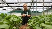 Một trang trại rau theo mô hình nông nghiệp đô thị ở Singapore. Ảnh: CNA