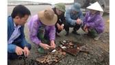 Một số mảnh gốm, sứ phát lộ tại hố khai quật ở Cồn Sú xã Xuân Hội, huyện Nghi Xuân, Hà Tĩnh