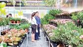Ra mắt siêu thị Cây xanh thứ 2, góp phần cung ứng mảng xanh cho TPHCM