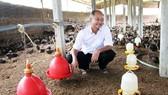 """""""Tỷ phú chân đất"""" Tư Rõ ở trang trại gà của ông  dưới chân núi Gò Loi"""