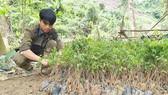 Tích cực trồng rừng thay thế tại xã Blahêê, huyện Tây Giang