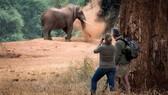 Voi trong khu bảo tồn thiên nhiên. Ảnh: naturalworldsafaris.com