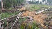 Tạm đình chỉ 4 trưởng ban quản lý rừng phòng hộ