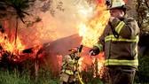 Biến đổi khí hậu làm thời tiết nóng lên gây ra  nhiều vụ cháy rừng ở Mỹ