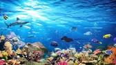 Đại dương: Sự sống và sinh kế