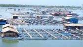 Giá thủy hải sản giảm, đầu ra bấp bênh