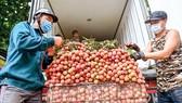 Người dân huyện Lục Ngạn, tỉnh Bắc Giang thu gom vải thiều bán cho thương lái, tháng 6-2021. Ảnh VIẾT CHUNG