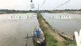 Bình Định: Bệnh dịch trên thủy sản bùng phát