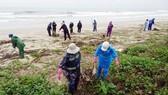 Môi trường biển và hải đảo đang bị ô nhiễm