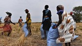 WFP giảm viện trợ lương thực cho Nam Sudan
