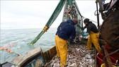 Pháp ra 'tối hậu thư' cho Anh về tranh chấp nghề cá