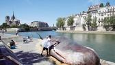 Cá voi trên sông Sein?