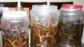 Uống rượu ngâm rễ cây, 7 người suýt mất mạng