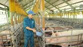 Phải tổ chức lại sản xuất để đảm bảo nguồn thực phẩm an toàn