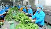 Doanh nghiệp bình ổn tại TPHCM: Đầu tư hơn 27.400 tỷ đồng phát triển vùng nguyên liệu