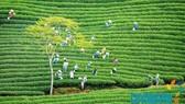 Kêu gọi doanh nghiệp TPHCM đầu tư vào tỉnh Lâm Đồng