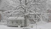 Đông Nam nước Mỹ khổ vì bão tuyết