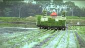 Nhật Bản đầu tư trồng lúa ở châu Á