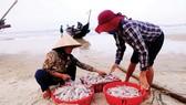 Ngư dân Thừa Thiên - Huế vươn khơi chuyến biển đầu năm Mậu Tuất trúng đậm cá khoai