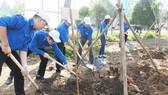 Bộ NN-PTNT đề nghị các tỉnh tổ chức Tết trồng cây