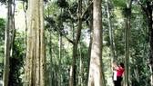 Rừng săng lẻ Tam Đình là điểm dừng chân lý thú của du khách