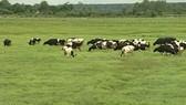 Hiệu quả giao khoán đất nông nghiệp của SAGRI không cao