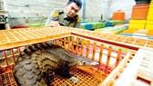Chống buôn bán động vật hoang dã bằng công nghệ