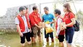 Lo mưa lũ, dịch bệnh hoành hành