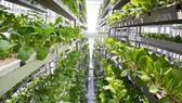 Singapore tăng cường giám sát thực phẩm