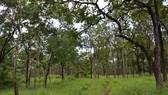 Khởi tố nguyên Phó Chủ tịch UBND huyện chiếm đất rừng